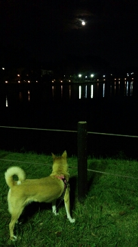 月を見る犬