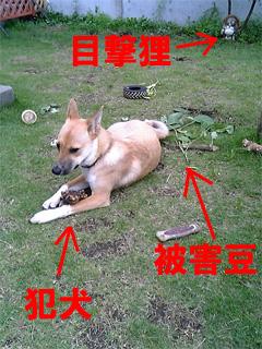 犯犬は犯行現場に戻る